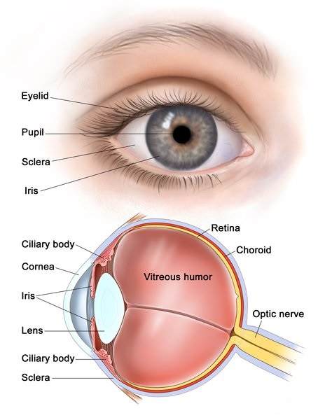 What is coloboma? Treatment, Disease and Symptoms
